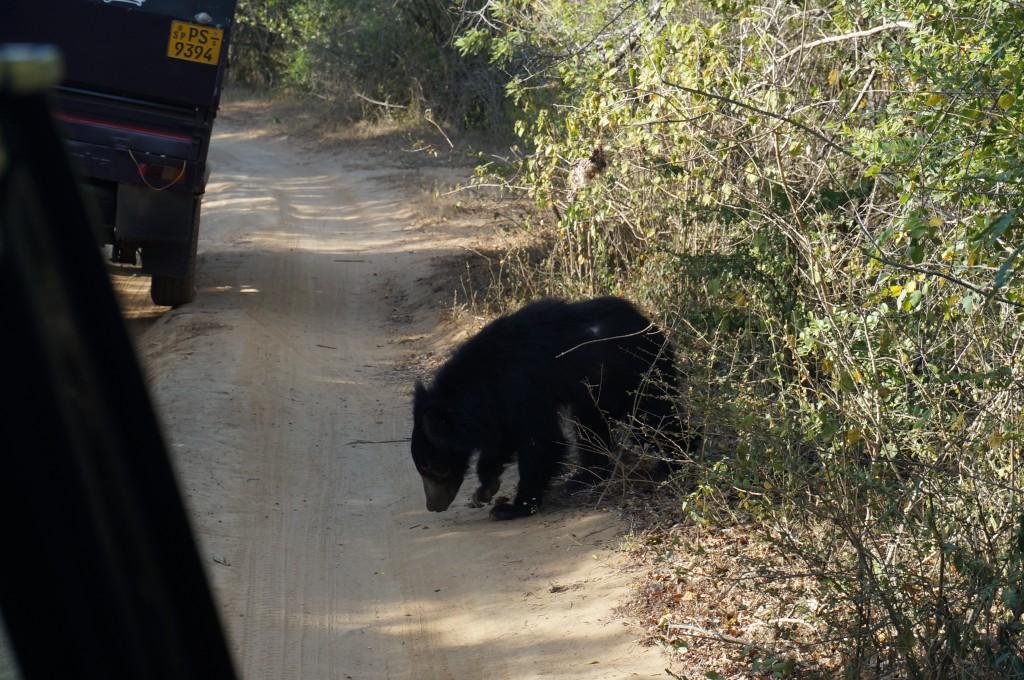 Reisebericht Yala Nationalpark