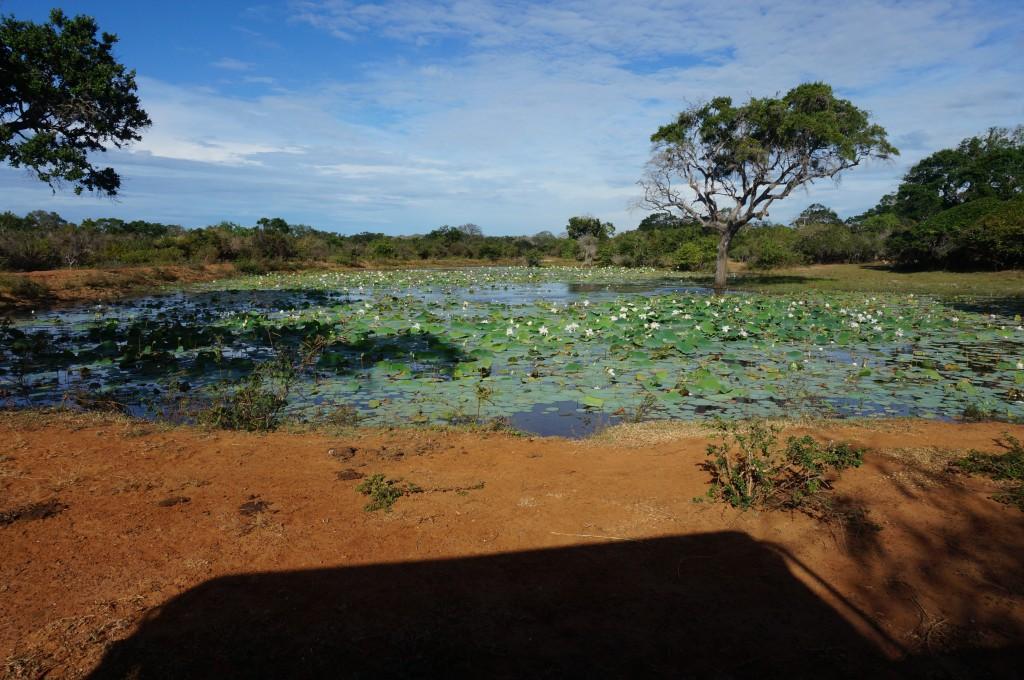 Unsere Safari im Yala Nationalpark - Kirinda Anreise und Übernachtung