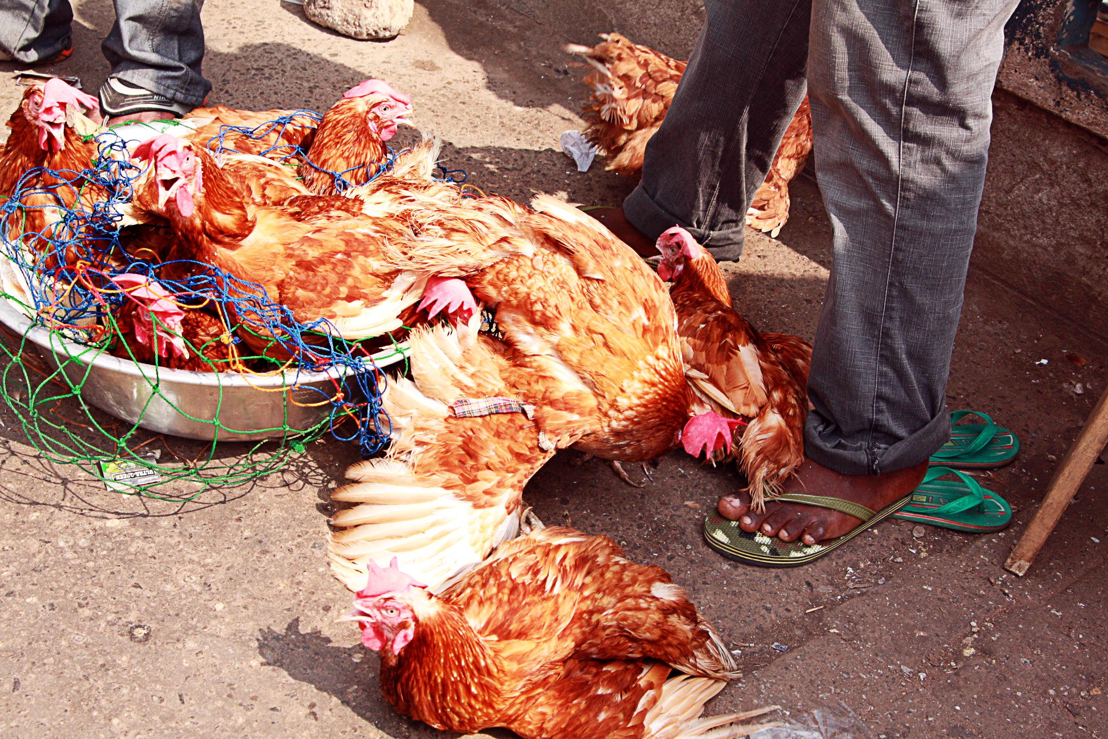 Hühner Markt in Ghana, Reisebericht Ghana Urlaub Reise
