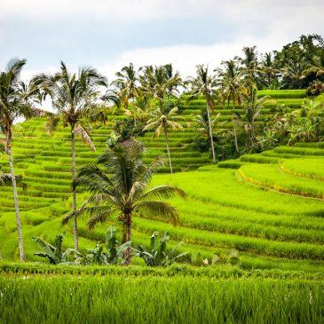 Reisebericht Bali Rundreise Tipps: Bali mit Kind, Roller und Backpack