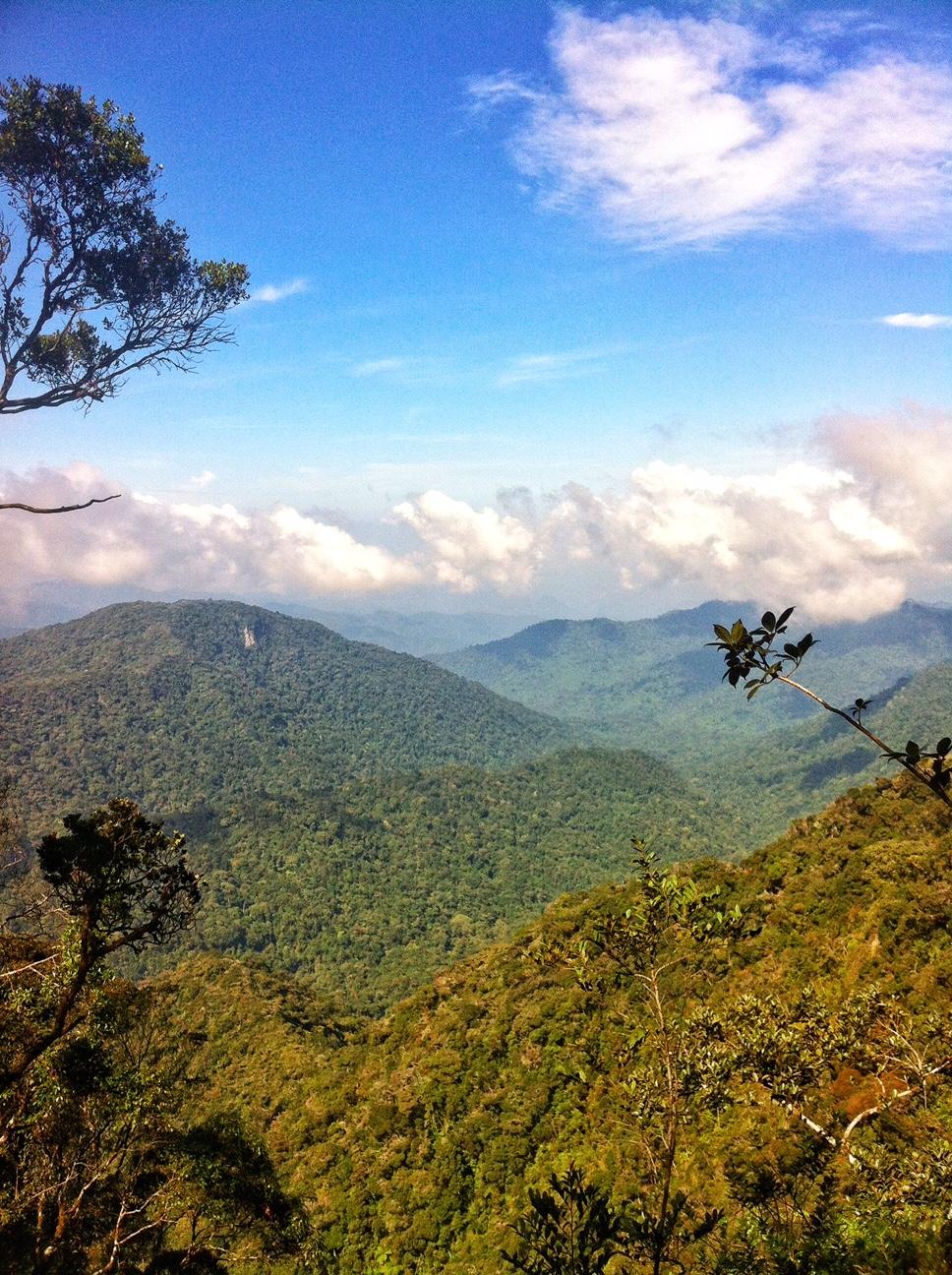 Cameron Highlands Reisebericht