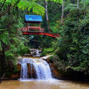 Malaysia – 5 geniale Aktivitäten in den Cameron Highlands mit Kind