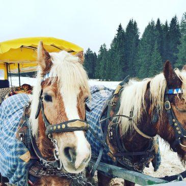 Winterurlaub in Tirol mit Kind – Aktivitäten und Kosten