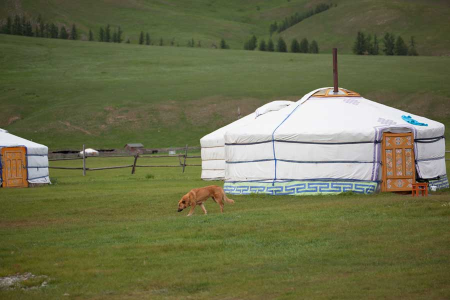 Mongolische Jurten Camp im Terejl Nationalpark, gorkhi-terelj national park ger camp