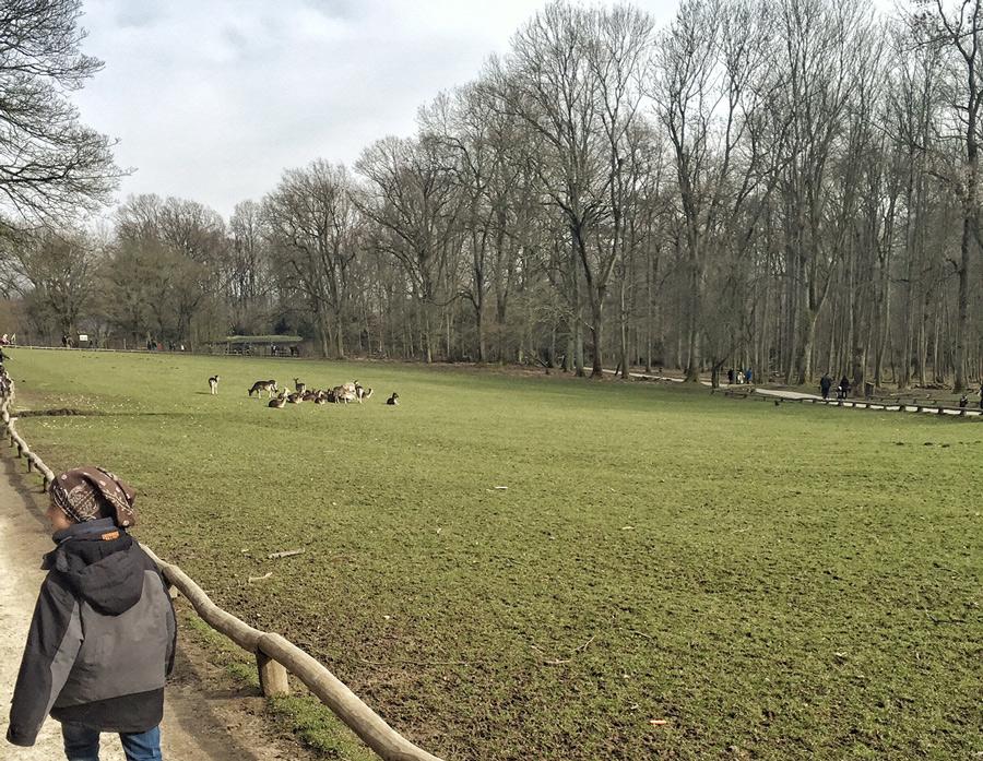 Düsseldorf mit Kindern Wildpark Düsseldorf Grafenberg Wald