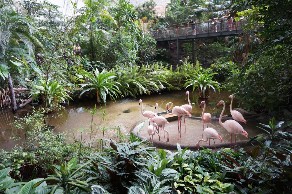 Tropical Islands Regenwald, Tropical Islands mit Übernachtung, Tropical Islands Hotel, Tropical Islans