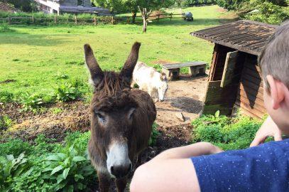 Tipps und Ausflugsziele im Nationalpark Eifel mit Kind