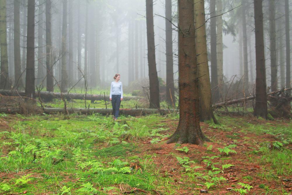 wandern mit Kind Eifel, der wilder Weg, Kermeter