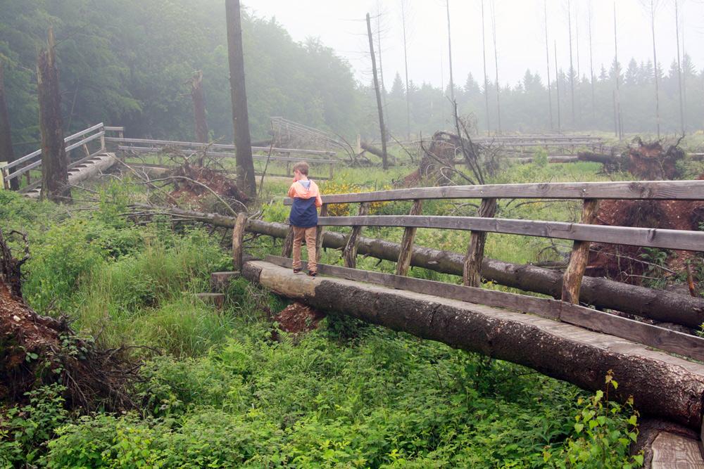 Baumgipfelpfad Eifel Wilder Weg wandern mit Kind