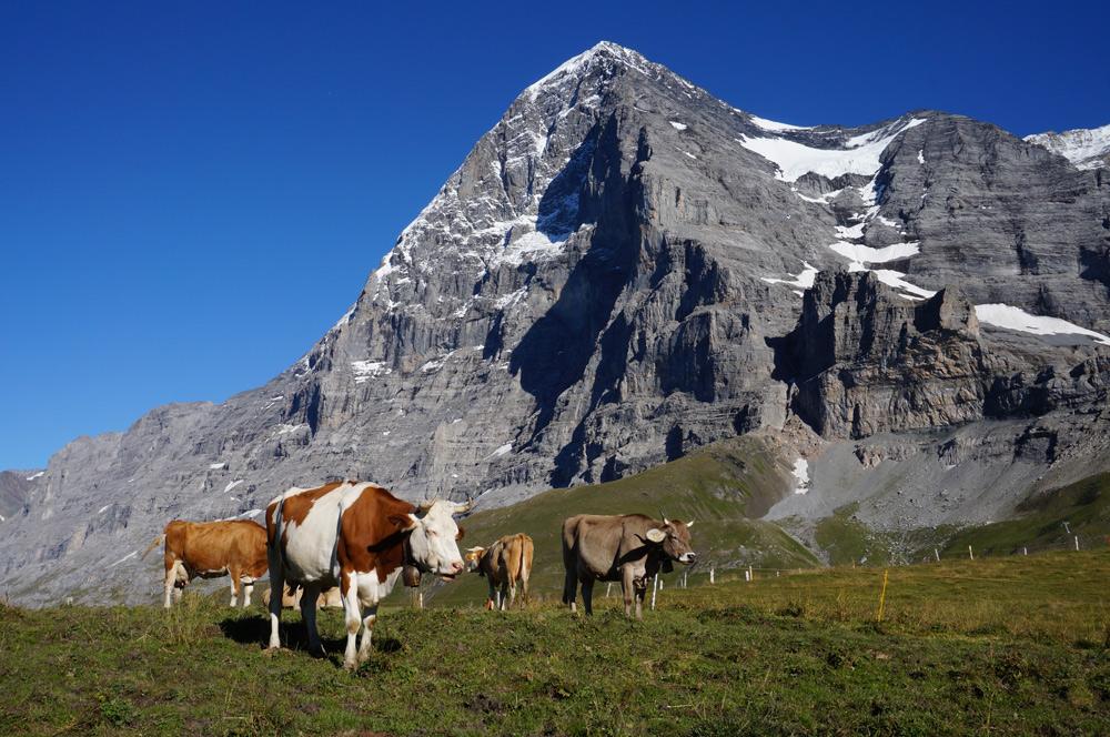 Hüttenwanderung Schweiz mit Kind im Berner Oberland Schynige Platte Faulholm Grindelwald Kleine Scheidegg