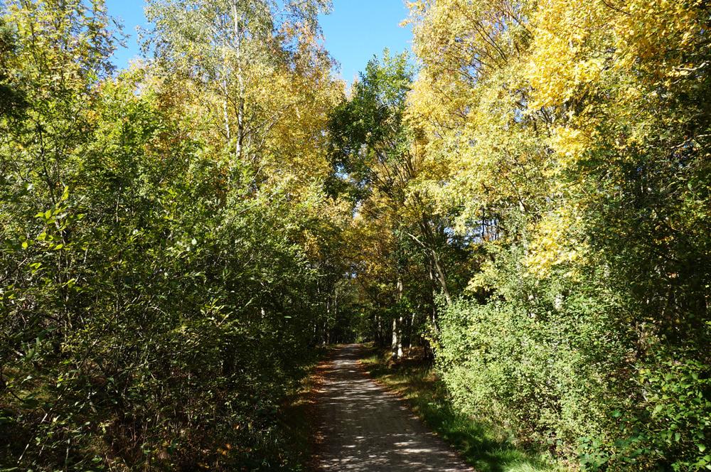goeteborg-tipps-aussicht-wald-spazieren-im-park
