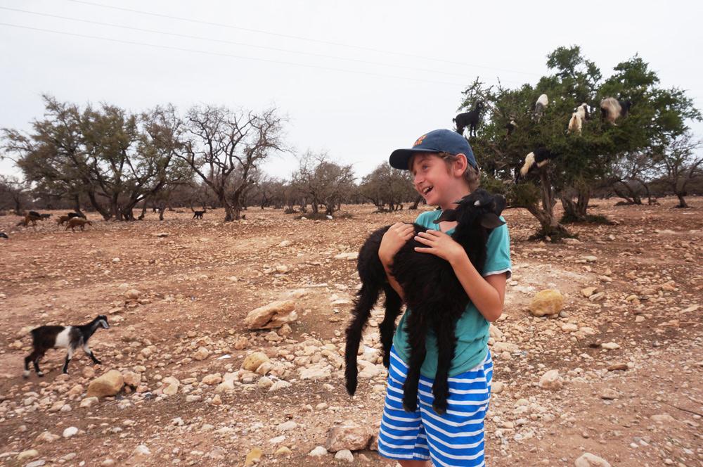 Sehenswürdigkeiten Essaouira mit Kind reisen. Baumziegen auf einer Araganöl Farm