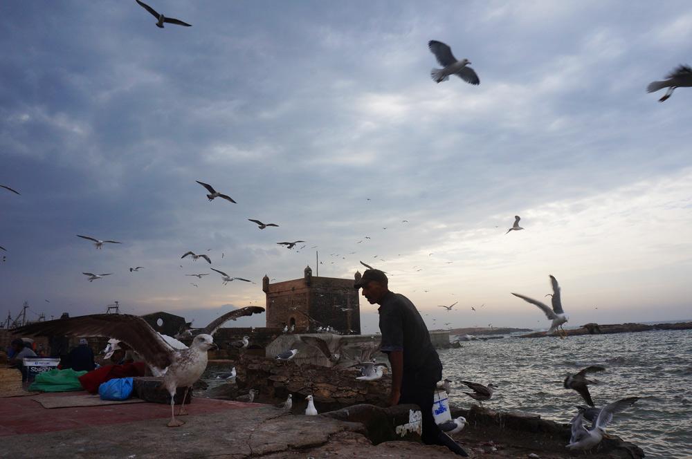Fischer und Möwen am Hafen in Marokko mit Kind