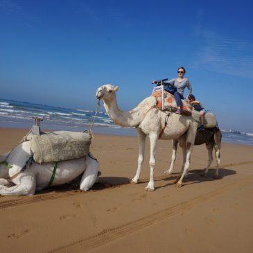 Tipps und Sehenswürdigkeiten in Essaouira – Marokko mit Kind