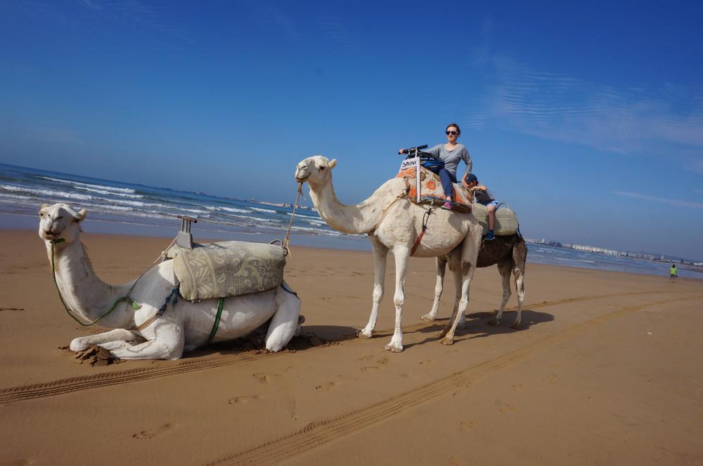 Sehenswürdigkeiten Essaouira mit Kind reisen Reiten am Strand auf Kamel