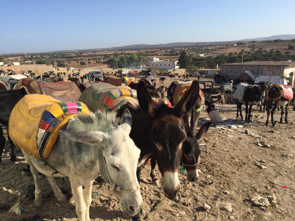 Sehenswürdigkeiten Essaouira mit Kind reisen Eselparkplatz auf dem Berber Markt bei Essaouira