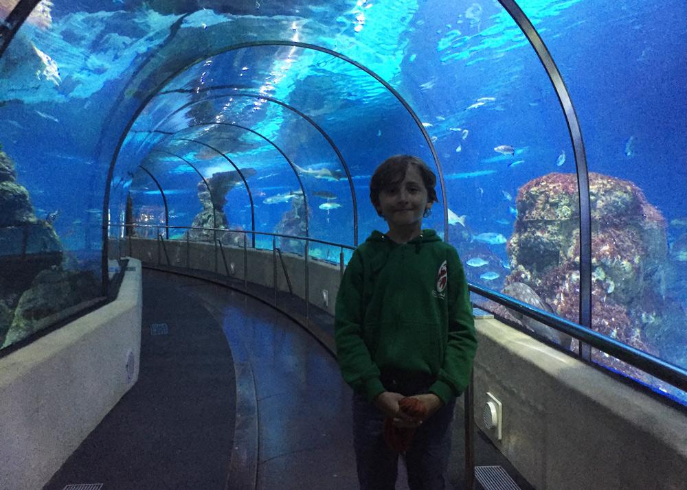 Wochenende in Barcelona mit Kindern Aquarium
