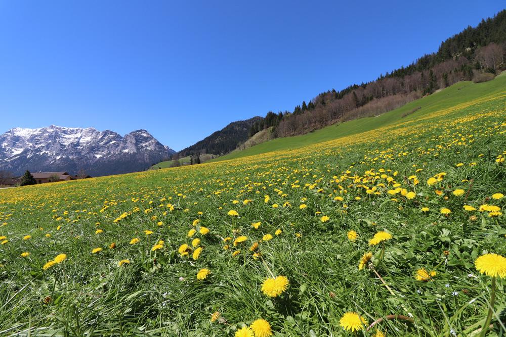 Wellness Familienhotel in Bayern. Best Western Berghotel Rehlegg Übernachten in Ramsau Wellnesshotel Berchtesgadener Land Bayern Wandern mit Kindern Urlaub Kurzurlaub