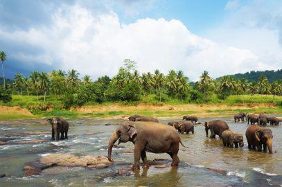 7 Gründe, warum du Sri Lanka lieben wirst