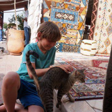 Marrakesch mit Kind – Stress pur oder Märchen aus 1001 Nacht?