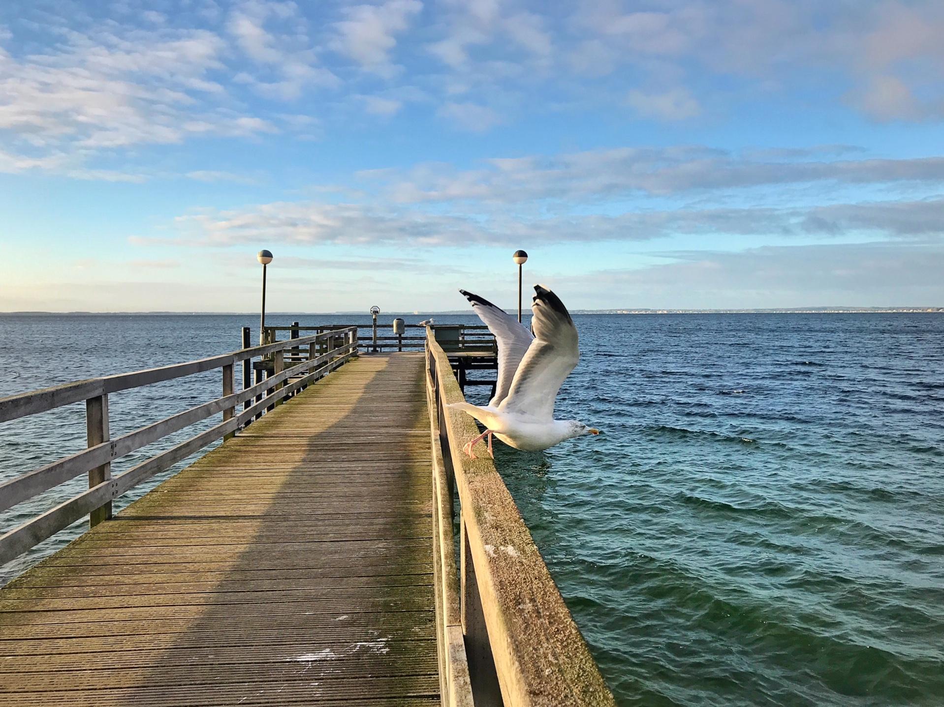 Lübecker Bucht, Meer, Möwe, Pier, Urlaub im Familienhotel