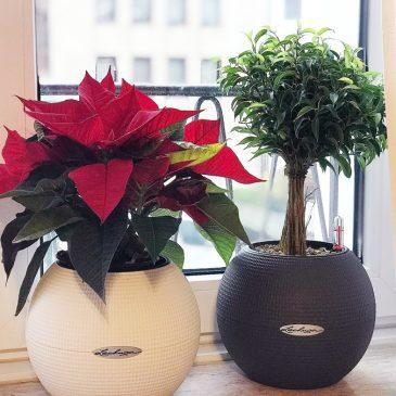 BEENDET: Adventstürchen 20 – LECHUZA Puro 20 Blumentöpfe gewinnen