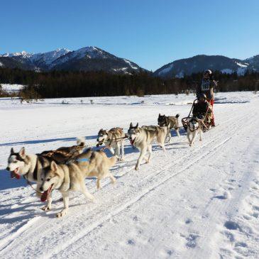 Huskys, Lamas, lange Latten – Unser Mama-Sohn-Urlaub im Pillerseetal