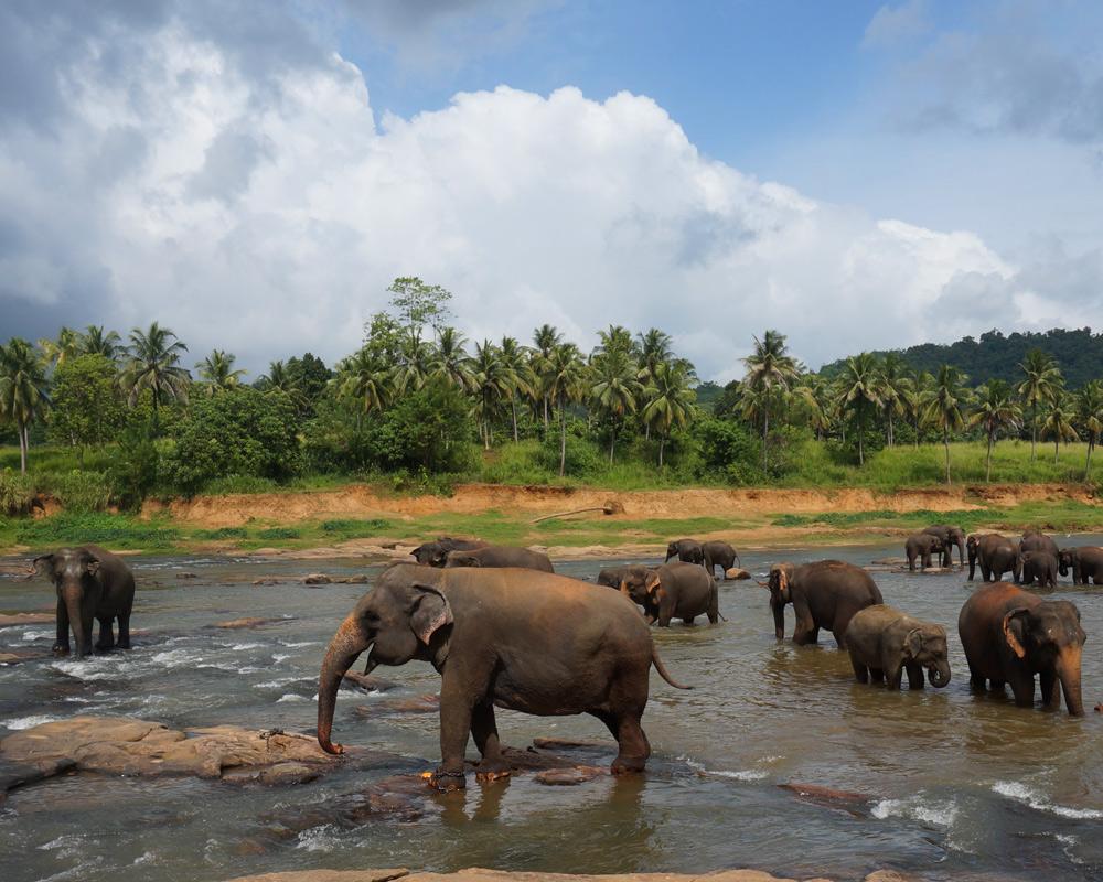 Wann wohin reisen - die besten Reiseziele für Familien mit Kindern nach Monaten in Europa und der Welt. Die beste Reisezeit für Kurzurlaub, Städtereisen und Fernreisen - Sri Lanka Elefanten