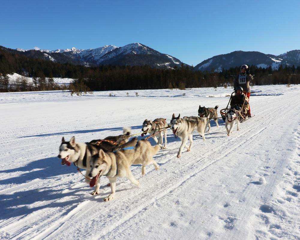 Wann wohin reisen - die besten Reiseziele für Familien mit Kindern nach Monaten in Europa und der Welt. Die beste Reisezeit für Kurzurlaub, Städtereisen und Fernreisen - Hundeschlitten Pillerseetal