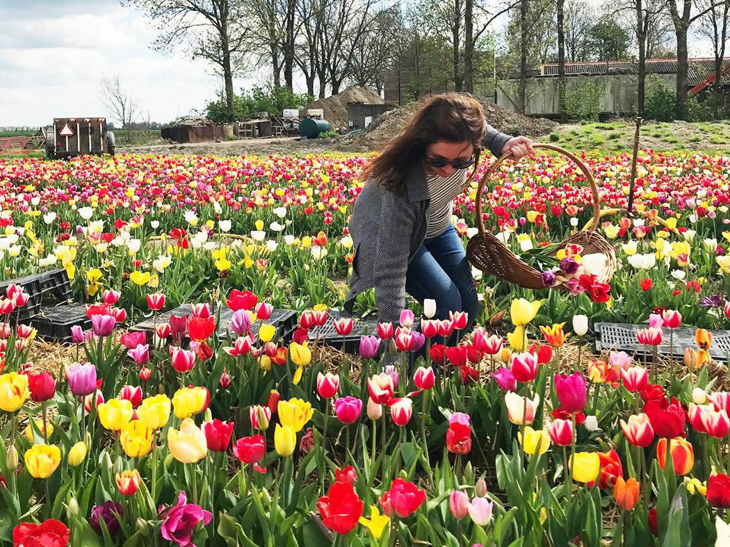 Highlights Tulpenroute Cleveland mit Kindern in Holland - Urlaub Niederlande mit Kindern. Attraktionen und Aktivitäten auf der Tulpenroute. Höfe und Betriebe