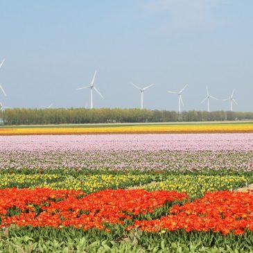 Tulpenroute Holland – 7 Highlights auf der Tulpenroute Flevoland für Familien