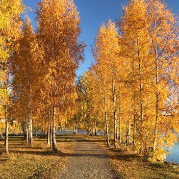Der goldene Herbst in Norwegen und 9 Gründe warum wir diese Jahreszeit so lieben.
