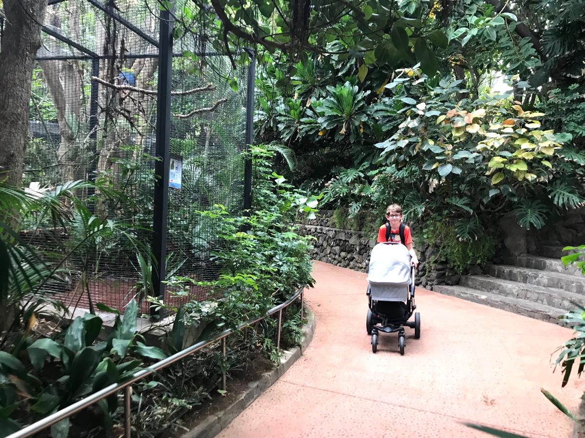 Loro Parque Teneriffa mit Kindern besuchen im Winter. Loro Park im Winter Teneriffa mit Kindern