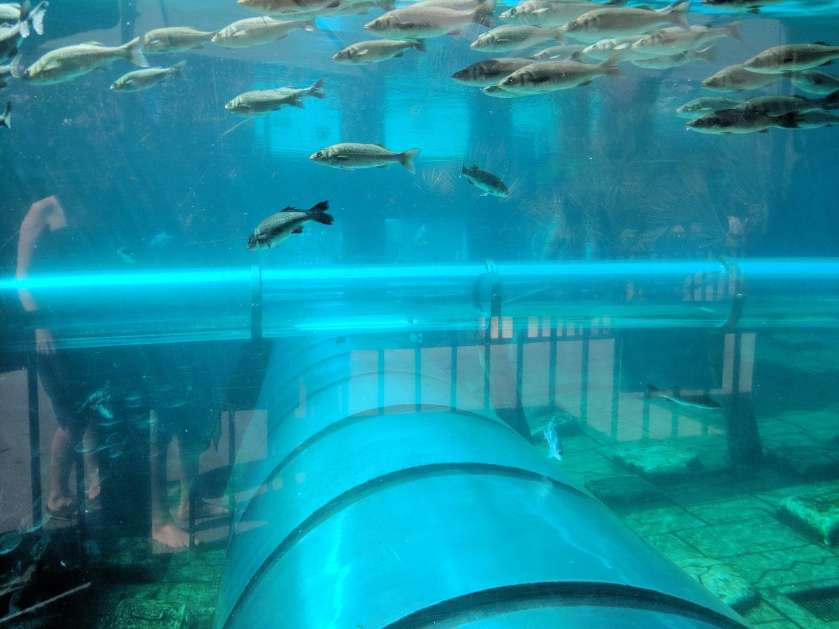 Haifischbecken Siam Park