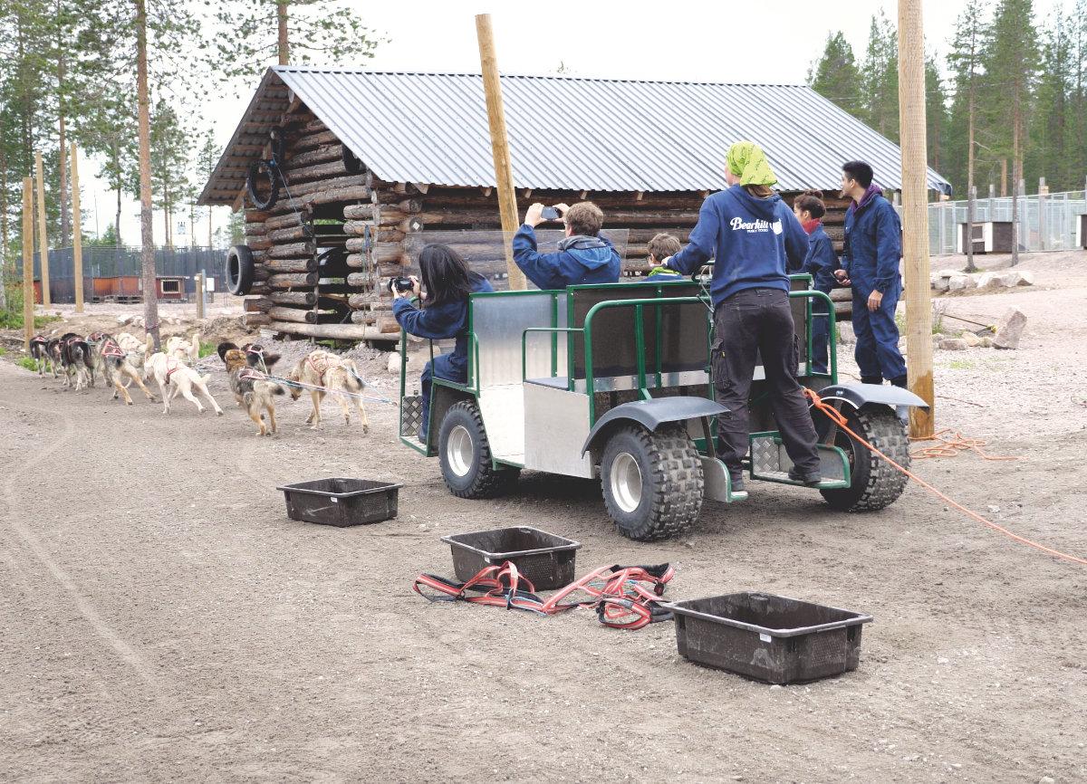Finnisch-Lappland - Die besten Aktivitäten in Rovaniemi im Sommer. Hundeschlittenfahrt im Sommer Rovaniemi