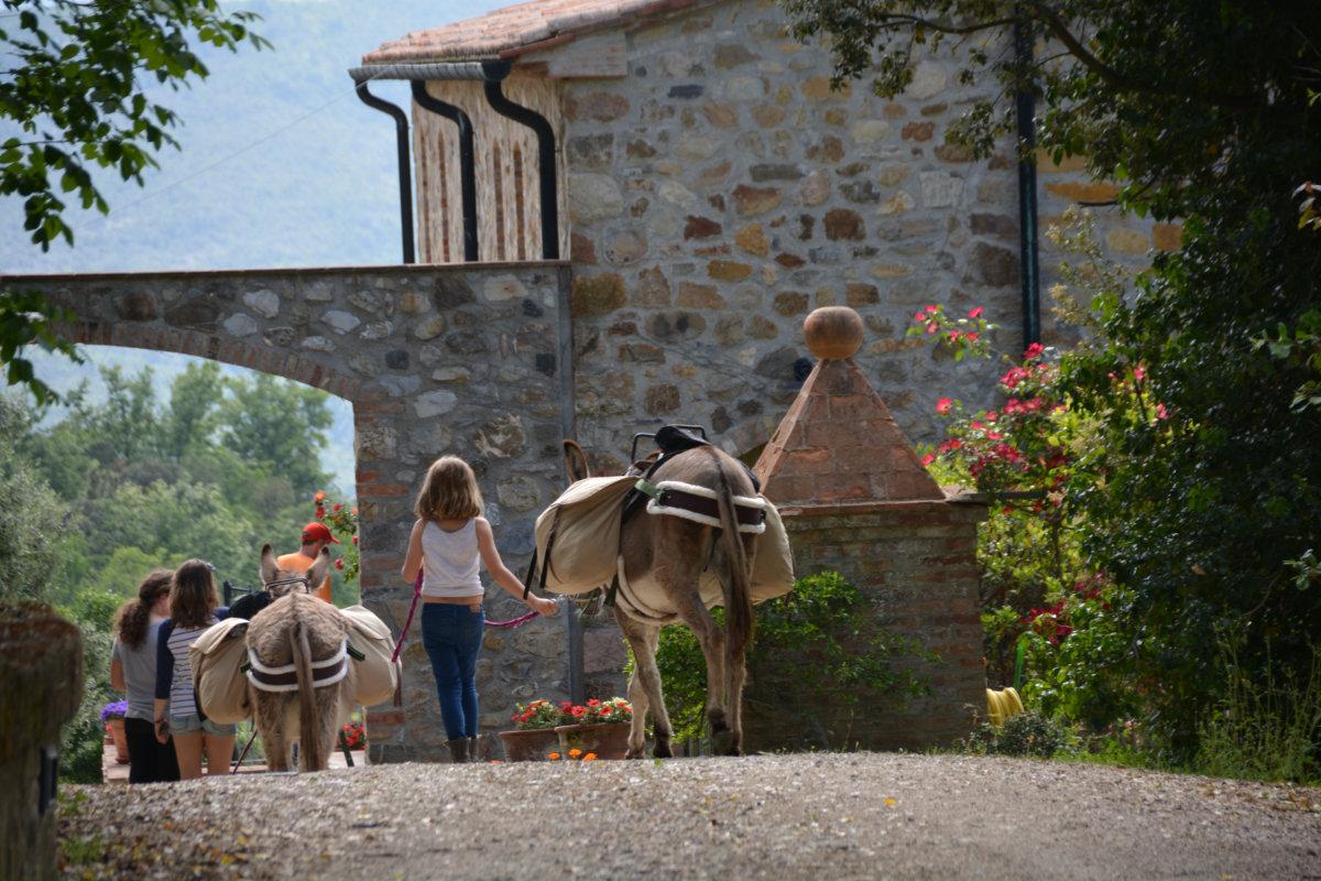 Unterwegs mit Kind und Esel
