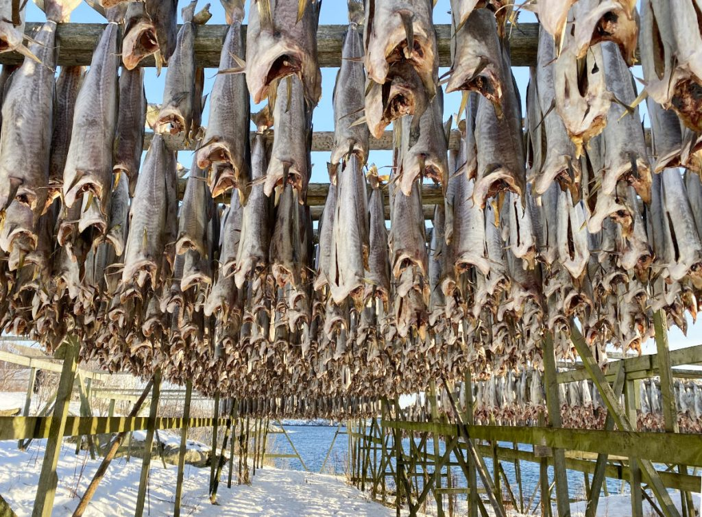 frischer Fisch, Stockfisch, Urlaub Lofoten im Winter, Lofoten in Norwegen mit Kindern, Henningsvaer