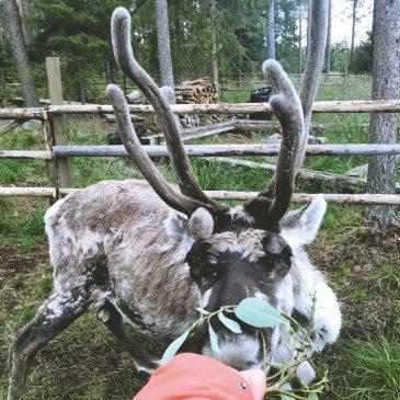 Schöne Orte für einen Urlaub in Finnland mit Kindern – Finnland Reiseziele im Sommer