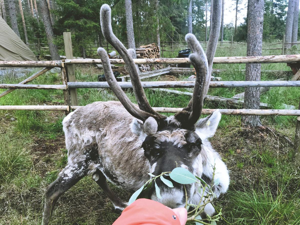 Urlaub in Finnland mit Kindern Reiseziele im Sommer