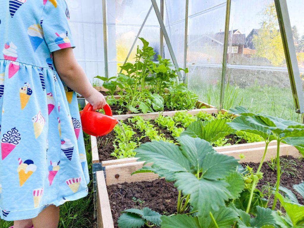 Pflanzen gießen im Gewächshaus