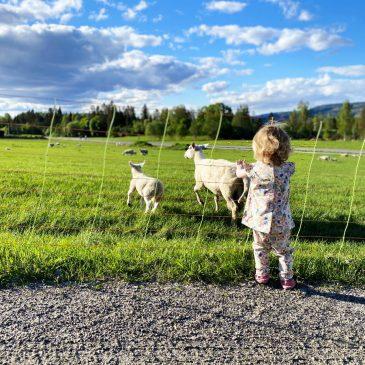 Was ich von meinen Kindern gelernt habe und wie wir unsere Familienmomente festhalten